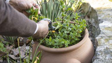 Garden Design: Tips and Ideas