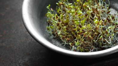 Photo of Raw Sprouts: Benefits and Potential Risks
