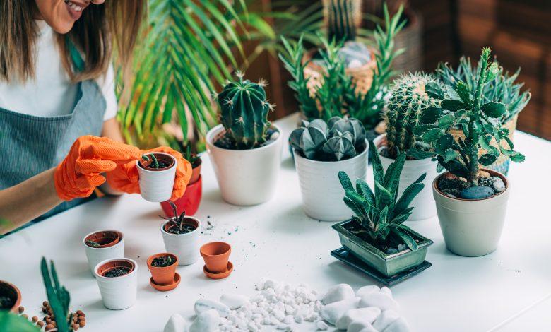 Indoor Botanical Gardens